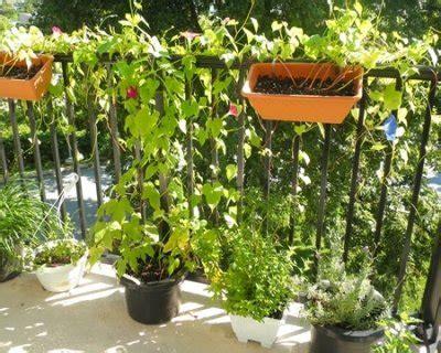 gelsomino in terrazzo come proteggere le piante terrazzo o balcone durante l