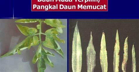 Pupuk Kalsium Nasa kelebihan dan kekurangan unsur hara makro dan mikro nasa