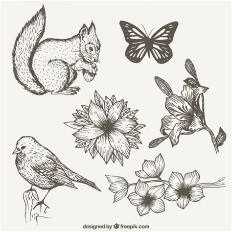 collection of hand drawn nature with animals vector free download