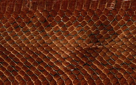 pin texture snake pictures reptiles skin pattern animals wallpaper on texture snake pictures reptiles skin pattern animals wallpaper desktop select