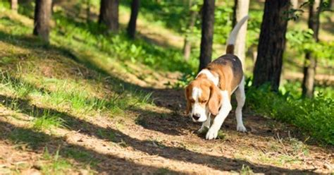 how to get a puppy to stop digging how to get your to stop digging pet behavior