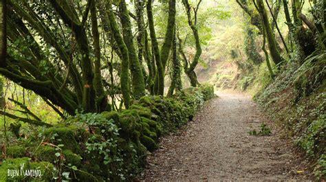el camino con una b000pgk644 10 razones para hacer el camino de santiago portugu 233 s