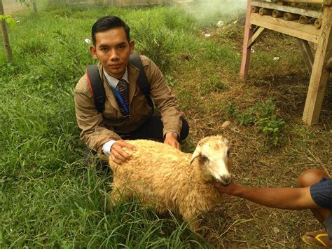 Kambing Murah harga bibit kambing 2018 murah dan berkualitas di atang