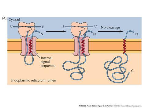 protein n terminus n terminus related keywords n terminus