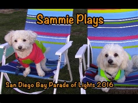 san diego lights 2016 san diego bay parade of lights 2016