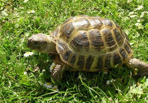 imagenes de libres y tortugas especies de tortugas de tierra
