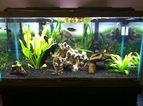 caribsea eco complete 20 pound planted aquarium black aquarium decor gravel