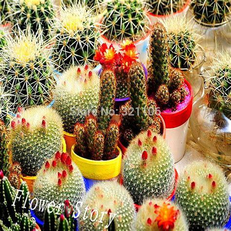 aliexpress com buy small potted bonsai mini succulent aliexpress com buy 30 mixed cactus flower seeds mini