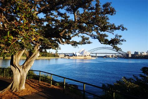 royal botanic garden sydney masterplan e architect