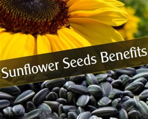 black sunflower seeds benefits benefits of sunflower seeds pictures to pin on