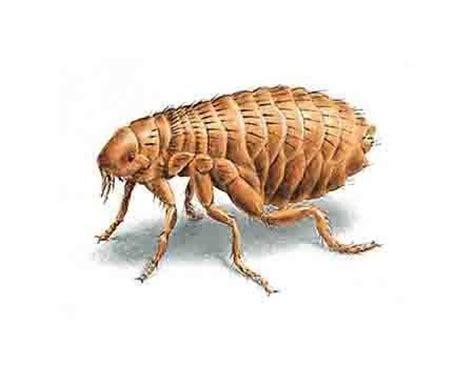 comment se d饕arrasser des fourmis dans une cuisine comment se d 233 barrasser des puces dans une maison