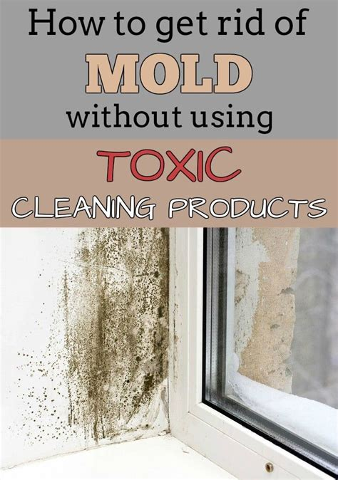 how to get rid of mold without using toxic cleaning