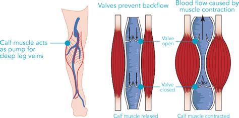 calf diagram do stimulators work discover research