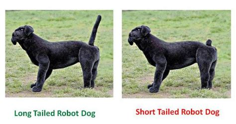 why are dogs tails docked the reasons why humans started tails barkpost