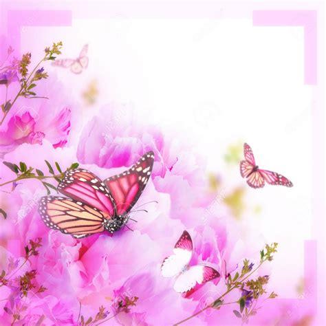 imagenes con mariposas bonitas mariposas gratis para descargar rosadas im 225 genes de