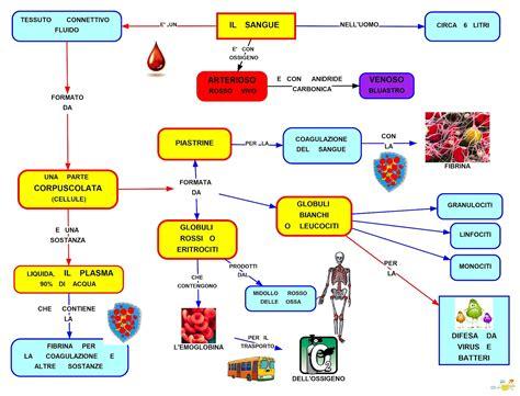 sangue rosso vivo dal sedere mappa concettuale sangue