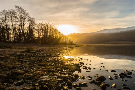 woodland trust scotland launches appeal  restore