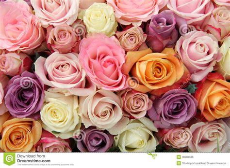 imagenes rosas de todos los colores rosas en colores pastel mezcladas foto de archivo imagen