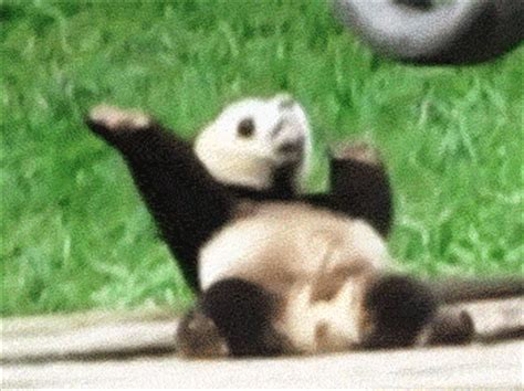 the panda haus 187 thepandahaus com 187 daily dudes super 30 funny daily life reaction gifs for when