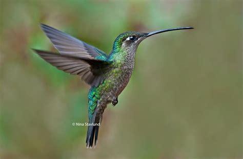 top 25 wild bird photographs of the week 42 palomar