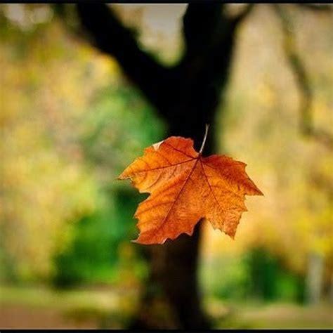 Daun Yang Jatuh Tak Pernah Membenci Angim danar daun yang jatuh tak pernah membenci angin belajar menulis indonesia