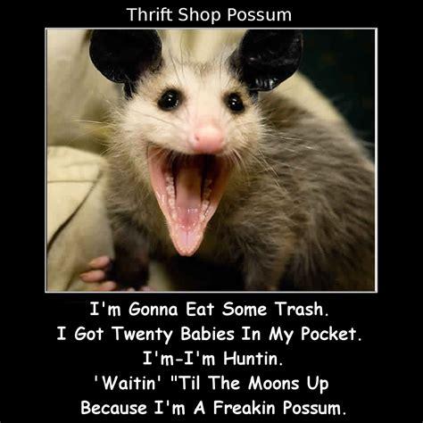 Possum Memes - thrift shop possum funny memes pinterest