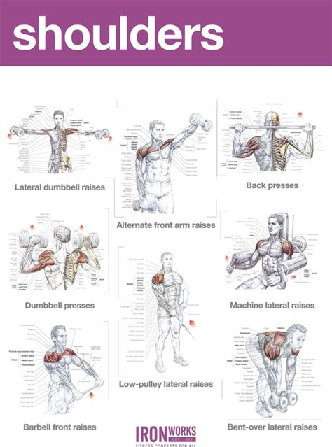 abs and shoulders workout exles workout