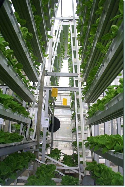 Plants Low Light by Vertical Farming Singapore S Solution To Feed The Local