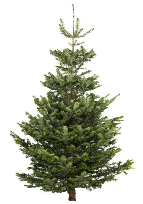 b and q best christmas trees large nordman fir real tree departments diy at b q