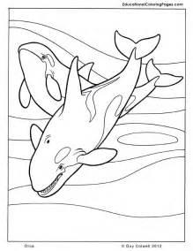 Orca Whale Coloring Pages Az Coloring Pages