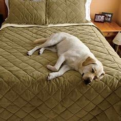 best comforter for dog hair our dog proof bedding is designed to protect your bed from