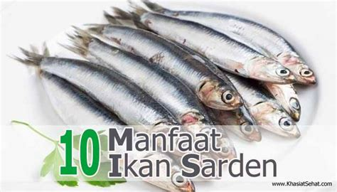 Minyak Ikan Green World 10 manfaat ikan sarden untuk kesehatan khasiat sehat