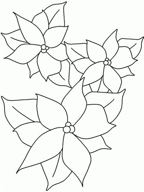 poinsettia coloring page pdf poinsettia coloring pictures pinterest poinsettia