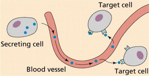 v protein djelovanje molecular mechanisms of the effect of protein peptide