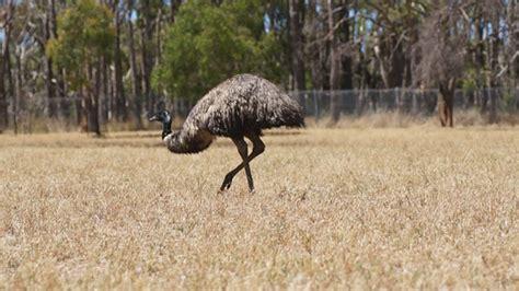 dafont zebulon australia 187 dolunai com