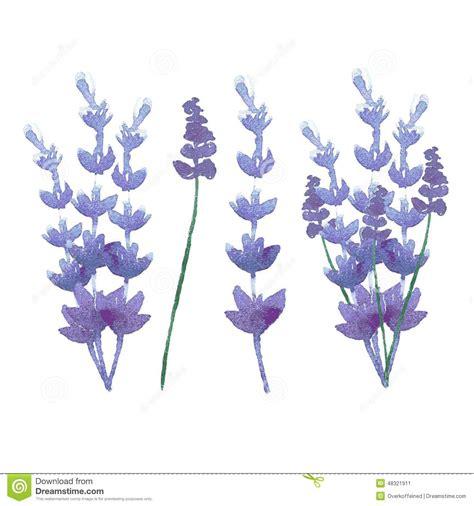 vector watercolor lavender delicate bunch stock vector