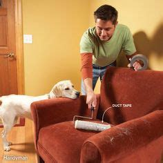 how to clean dog hair from couch 1000 ideas about remove pet hair on pinterest cat urine