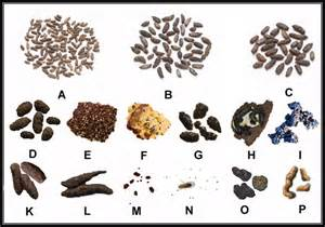 pest droppings identification how to tell the