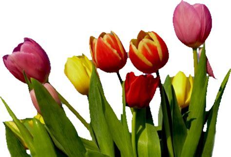 flower   images  clkercom vector clip art