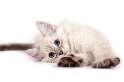 gatti alimentazione casalinga cibo per gatti tutto ze
