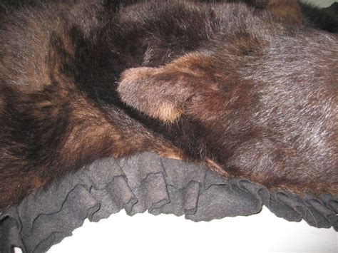 bearskin rug for sale 1960s taxidermy mounted backed brown skin rug for sale at 1stdibs