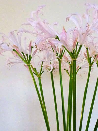 Langstielige Blumen blumen str 228 u 223 e kr 228 nze in dresden und sachsen