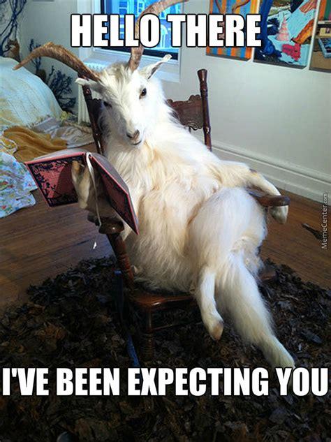 extremely entertaining goat memes sayingimagescom