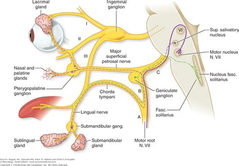vestibulocochlear reflex chapter 47 diseases of the cranial nerves neupsy key