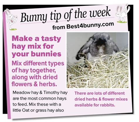 Must For The Week The House Bunny by 17 Best Images About Animals And Tips On
