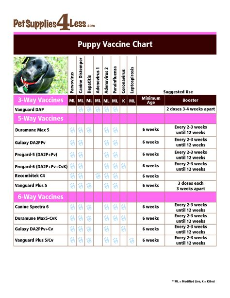 how many vaccinations do puppies need vaccinations vaccination schedule vaccinations for home design idea