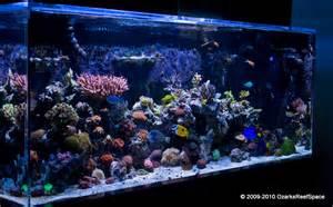 Long Island Saltwater Reef And Aquarium Fish   blackhairstylecuts.com