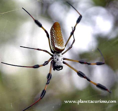 imagenes de arañas blancas las 10 especies m 225 s venenosas del planeta planeta curioso
