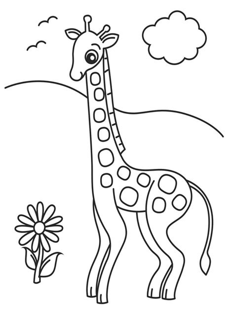 giraffe eating coloring pages the gallery for gt giraffe eating leaves drawing