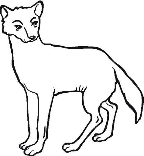 coloring page australian animals free coloring pages of australian animals